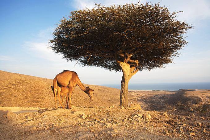 Salalah, le sud d'Oman