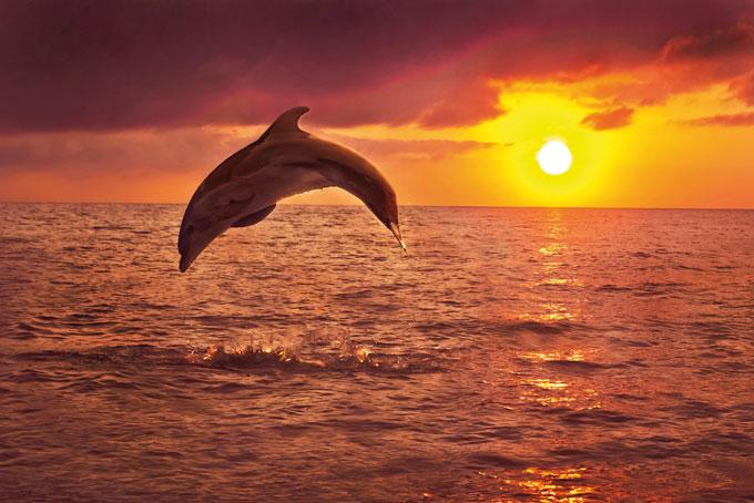 Nein zu Delphinshows