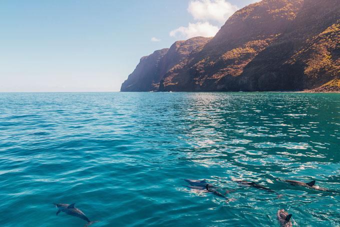 Frei lebende Delphine an der Na Pali-Küste