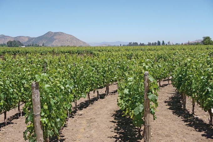 Roadtrip zu Chiles und Argentiniens Top-Weingebieten