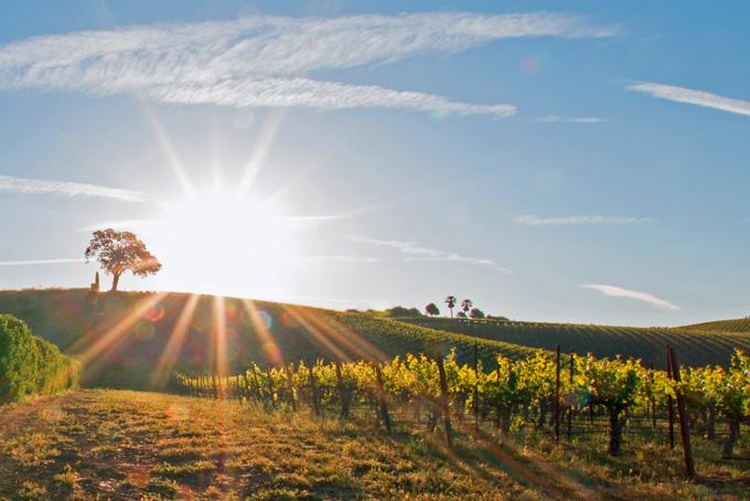Kalifornischer Genuss mit unseren 10 Tipps