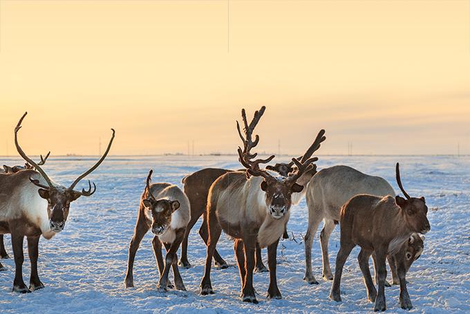 Wintermagie in Finnisch Lappland