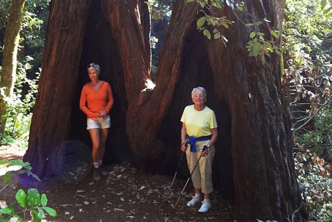 Meine Mutter und Frau vor den riesigen Mammutbäumen in Marin County