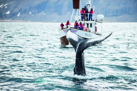 Whale Watching-Tour