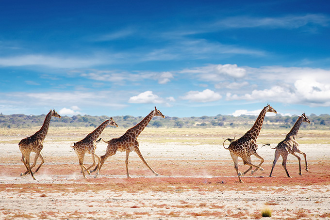 Top Highlights in Namibia
