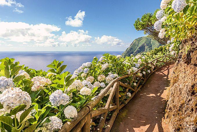 Küstenweg mit Hortensien auf São Miguel (Azoren, Portugal)