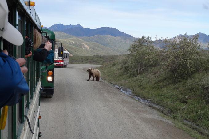 Embouteillage au parc national de Denali