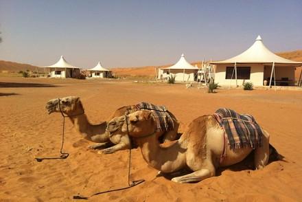 Desert-Nights-Camp