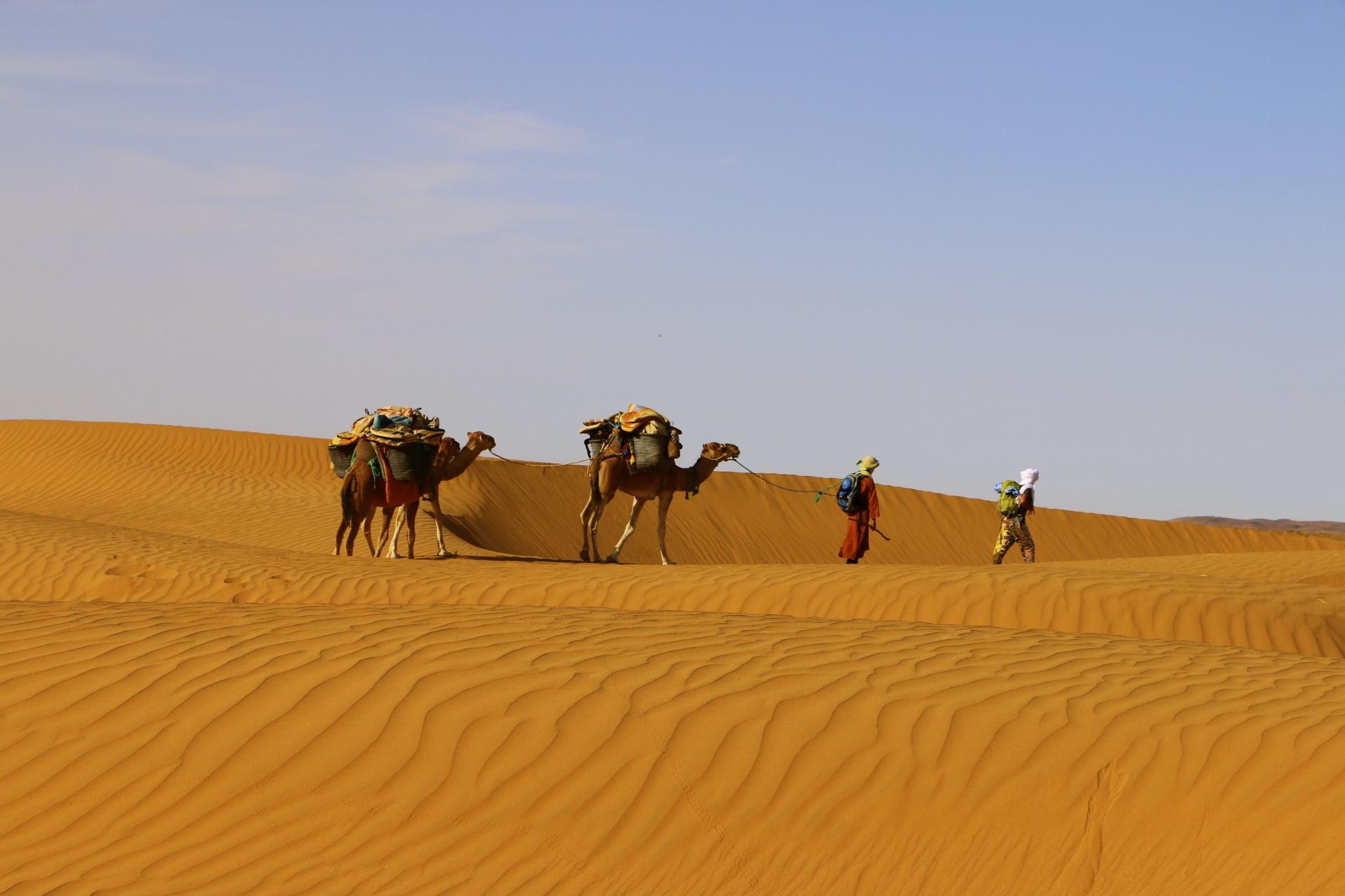 Méharée dans le Sahara, une expérience unique