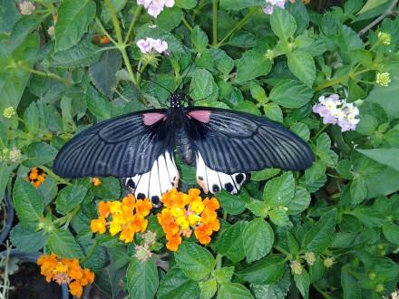 Exotischer Schmetterling