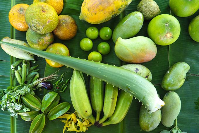 Exotische Früchte direkt aus der Biofarm
