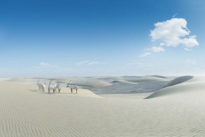 Typische Landestiere Oryxantilopen