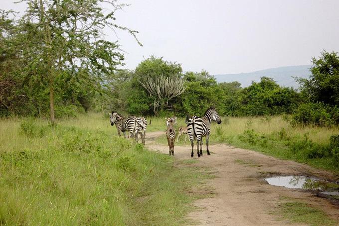 Uganda und Ruanda – die Heimat der Berggorillas