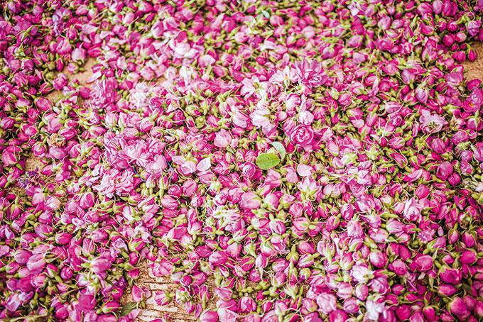 Marokko: Farbenprächtiges Rosenfest