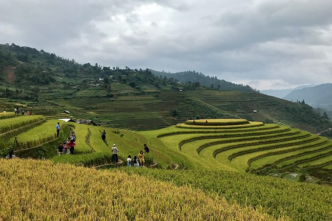 Raspberry Hill in Mu Cang Chai