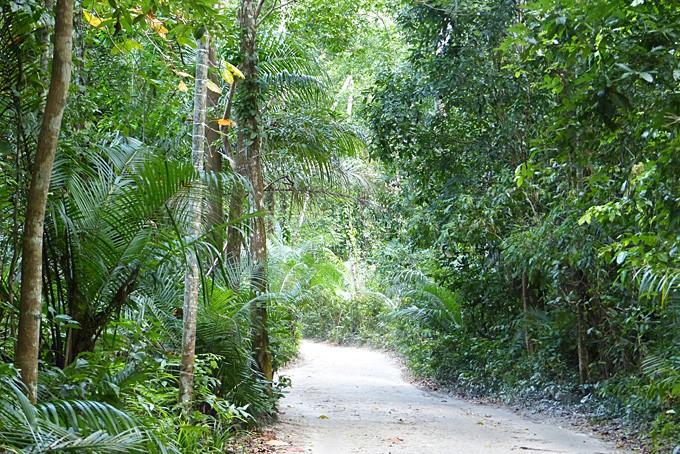 Holperige Fahrt durch den Ngezi Forest