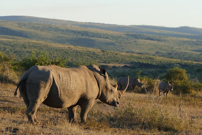 Nashorn entdecken auf unserer Pirschfahrt