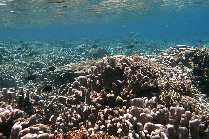 Tauchparadies Sulawesi