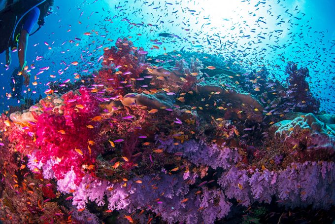 Tauchparadies Rainbow Reef
