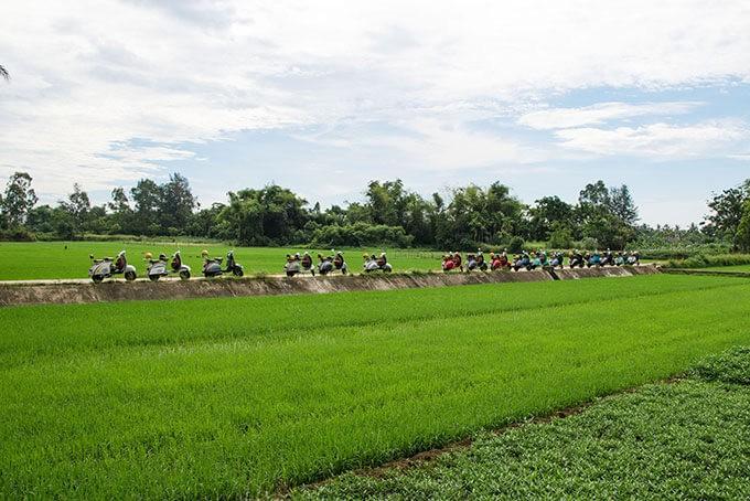 Reisfelder bei Hoi An