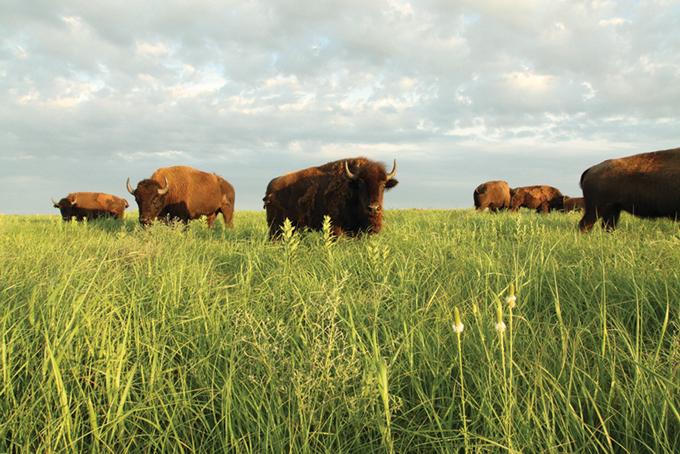 Tallgrass Praire Preserve, Pawhuska, OK