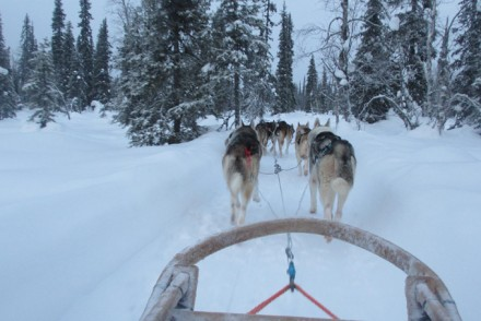 Huskysafari in Lappland