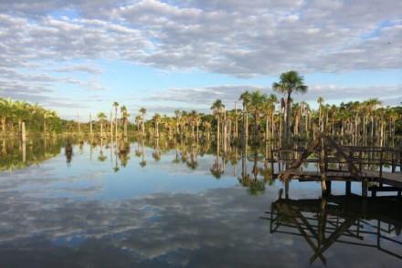 Un endroitmagique du Pantanal