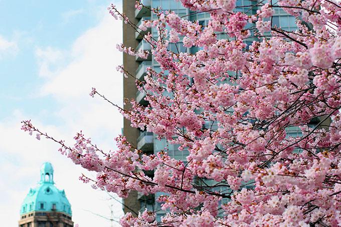 Le printemps à Vancouver