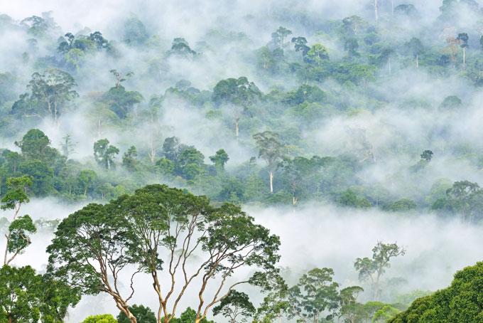 La vallée de Danum, le pays des arbres géants