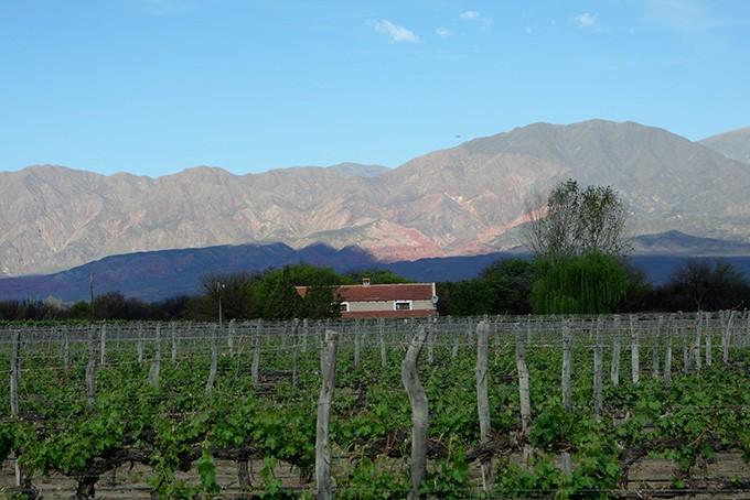 Weingebiet