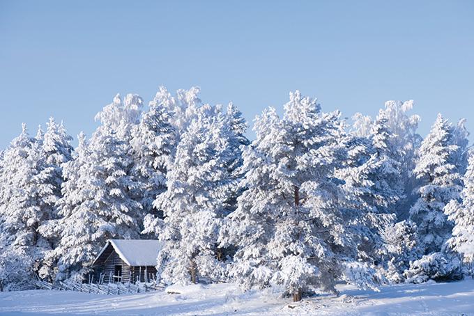 Unser CEO empfiehlt: Verzaubert im Winterwunderland