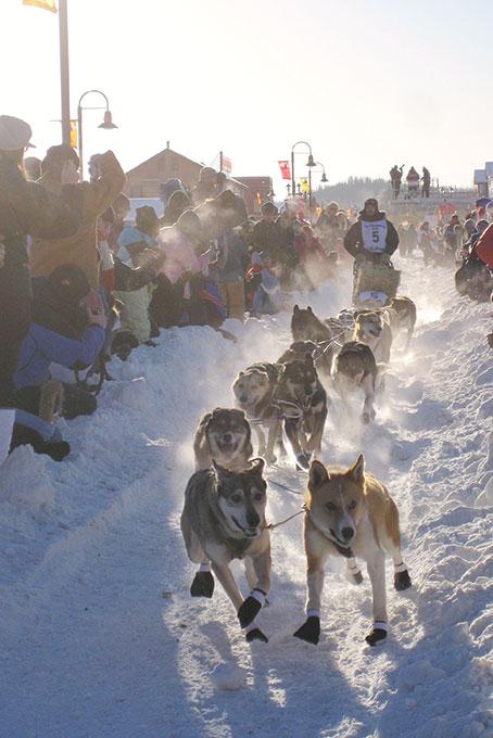 Yukon Quest – das härteste Hundeschlittenrennen der Welt