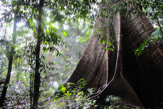 Regenwald im Sonnenschein