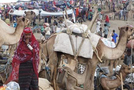 Bati Warenmarkt (man merke, Kamele mit Gestellen auf dem Rücken stehen nicht zum Verkauf, da sie die Lasten her- und wieder wegtransportieren!)