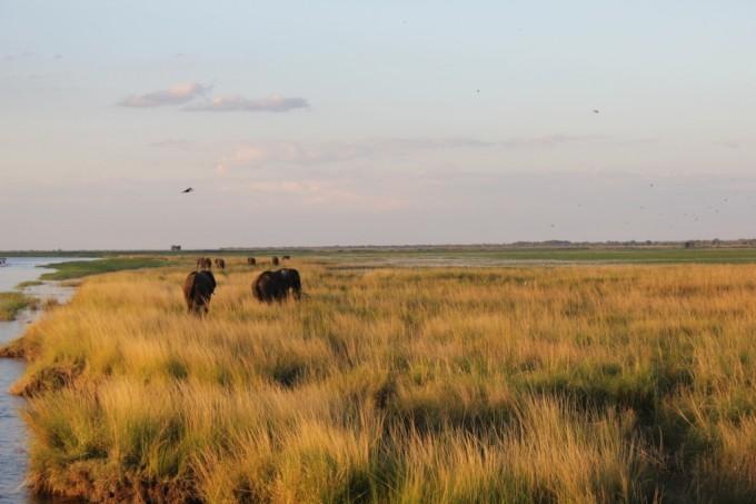 Mit Nomad Adventure Tours durch den afrikanischen Busch