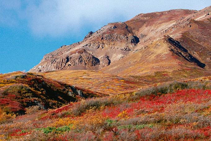 Der Denali Nationalpark in Alaska