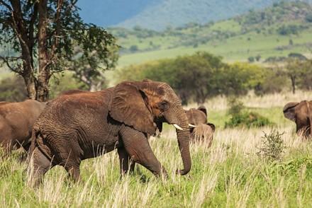 Der Kidepo Nationalpark ist zu jeder Jahreszeit eine Reise wert