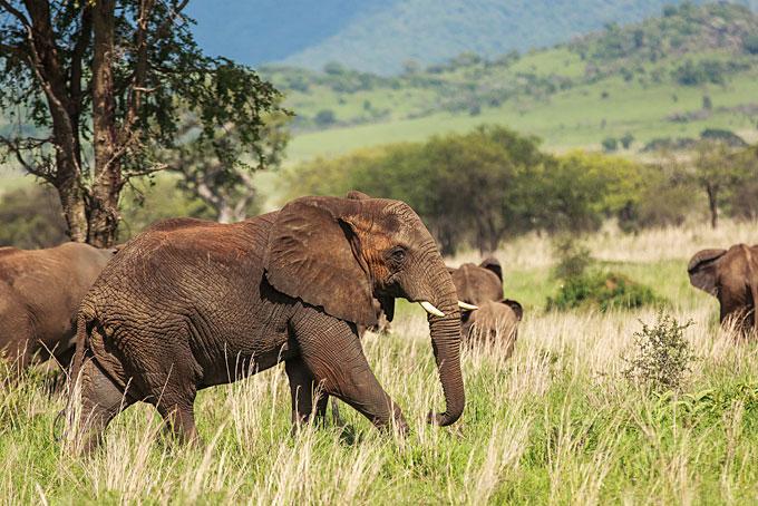 Kidepo – Unbekanntes Safariparadies Teil 2
