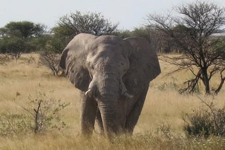 etosha-nationalpark-elefant