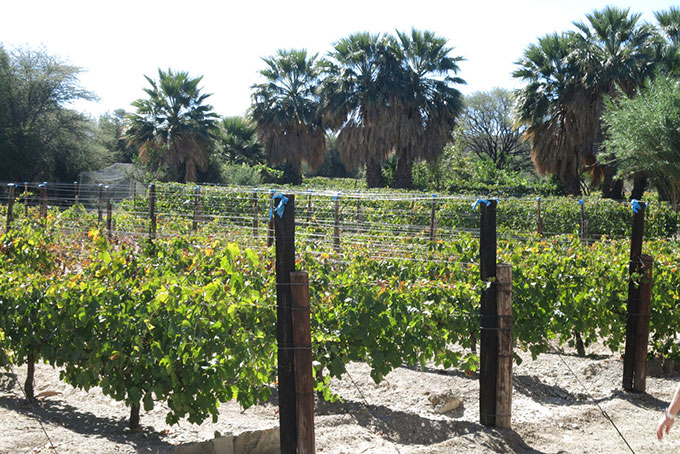 Wein aus der Wüste in Namibia