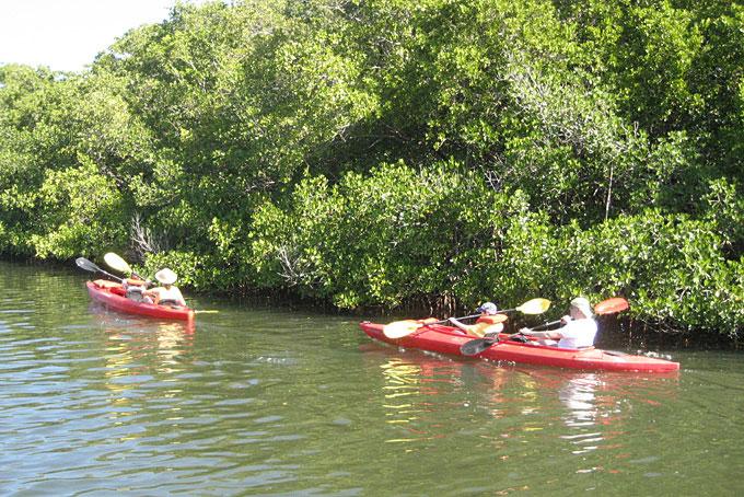 Notre tour en canoë dans les Everglades