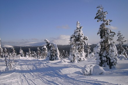 Finnisch Lappland – wo sich Husky und Rentier gute Nacht sagen
