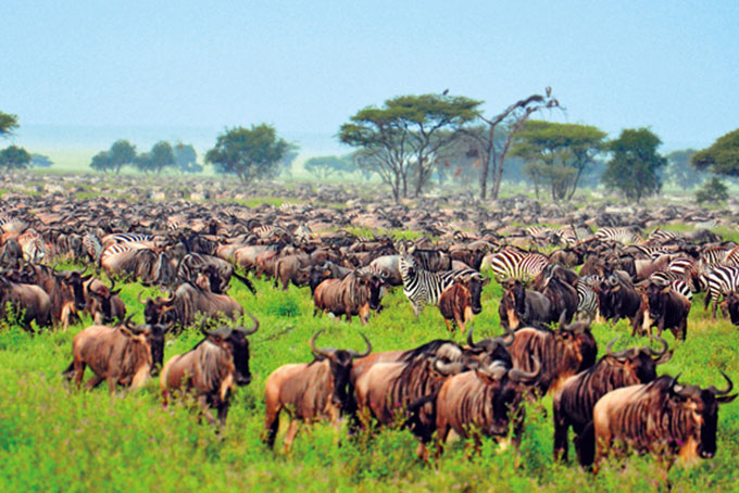 Im Serengeti-Nationalpark