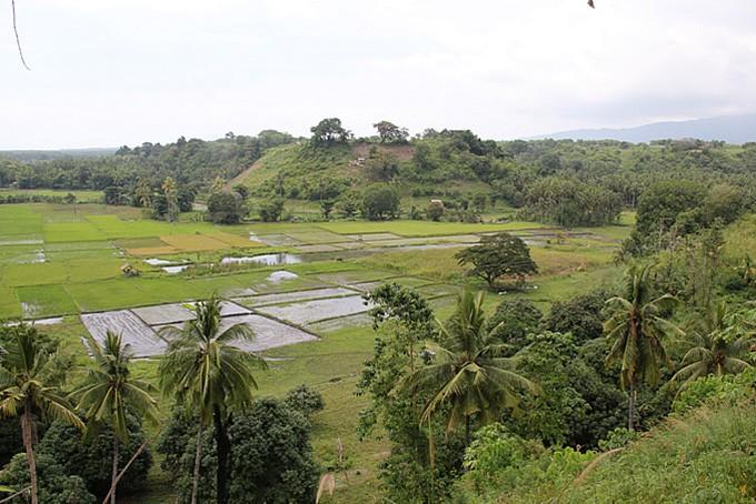 Reisfelder auf Negros