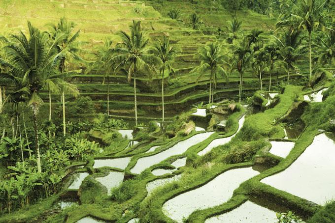 Bali in Bildern