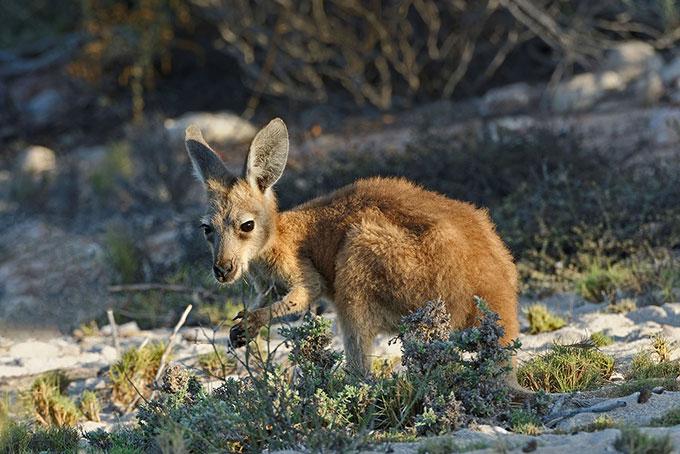 Markus Heuer's Bilder aus Australien
