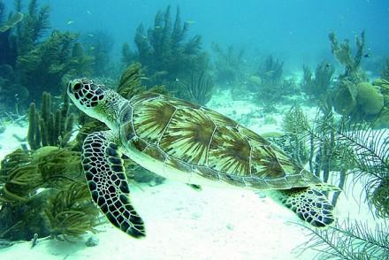Schildkröte bei Karpata