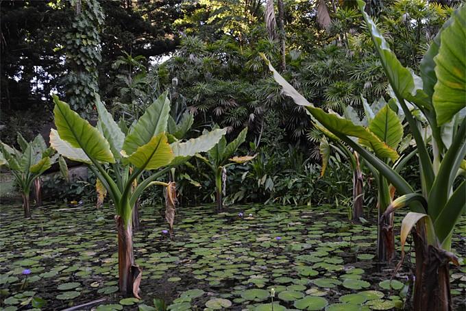 Im Botanischen Garten in Mahé