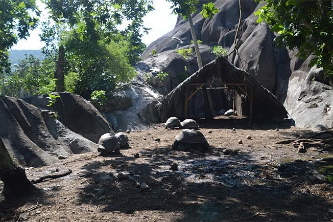 Riesenschildkröten im Park Union Estate auf La Digue