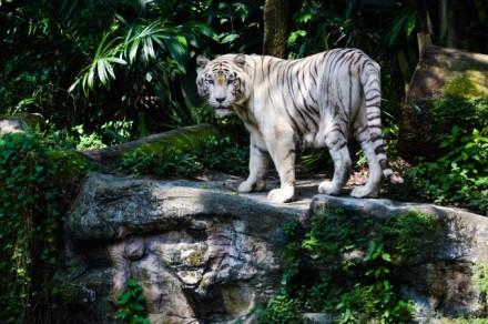 Singapore Zoo - amazing!